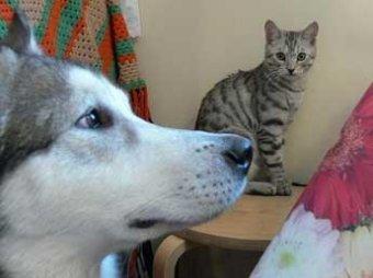 Владельцев кошек и собак могут обязать делать для них прописку
