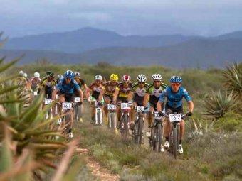 В ЮАР группу велогонщиков атаковали осы