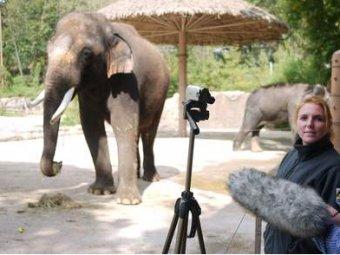 В южнокорейском зоопарке нашли говорящего слона