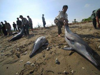 Около сотни дельфинов выбросились на пляжи Австралии