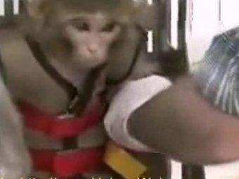 Иран успешно запустил обезьяну в космос