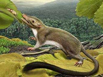 Ученые: предок человека был похож на динозавра и питался насекомыми