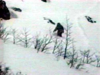 Британские ученые выяснили, кто скрывается под видом кузбасского йети