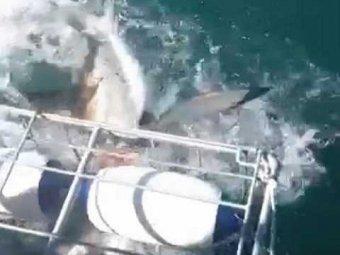 """В ЮАР гигантская белая акула напала на туристов во время """"дайвинга в клетках"""""""