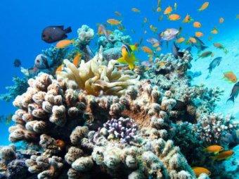 В США с корабля уволили 4 офицеров, повредивших коралловый риф