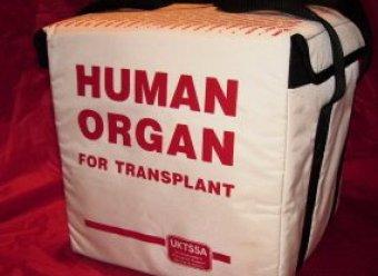 СМИ: Органы погибших в США российских детей использовали для трансплантации