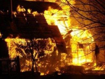 Пожар на конюшне в Подмосковье: более 20 лошадей сгорели заживо