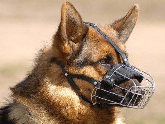 Закон о содержании домашних животных: кого будут штрафовать за собак и кошек?