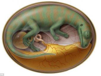 В Китае нашли кладбище древнейших эмбрионов динозавров