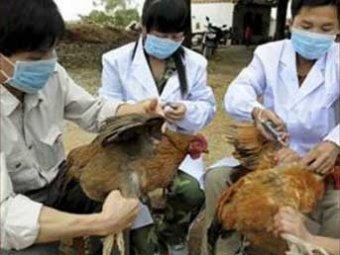 Китайские ученые выяснили происхождение вируса птичьего гриппа