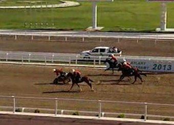 В Сети появилось видео падения президента Туркмении с лошади
