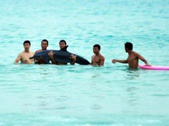 Китайские туристы шокировали Интернет фотосессией с умирающим дельфином
