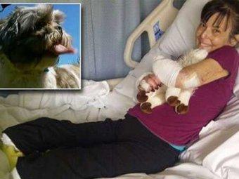 В Канаде женщине ампутировали ноги и руку после укуса домашней собаки