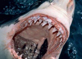 В Бразилии акула откусила туристке ногу на глазах отдыхающих
