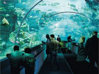 В Питере появятся гигантский океанариум и Диснейленд за 15 млрд руб