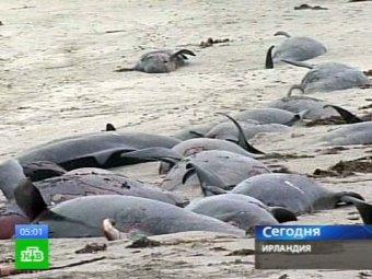 Названа причина массовой гибели дельфинов в США