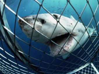 """Учёные выловили """"акулу в акуле"""""""