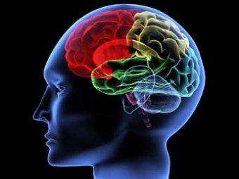 Ученые: мозг человека может прожить 200 лет