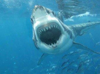 На Гавайях акула откусила руку 20-летней туристке из Германии