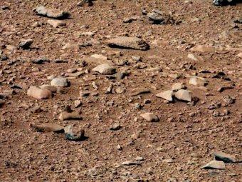 """Учёные обнаружили на Марсе """"хомяка"""""""