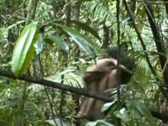 Журналисты засняли на видео неизвестное ранее племя индейцев Амазонки