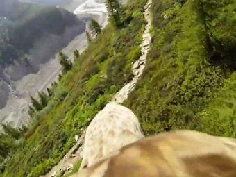 """Новый хит Youtube: орнитологи сняли видео полёта """"глазами"""" орла"""