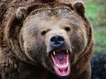 На Камчатке медведь загрыз рыбака