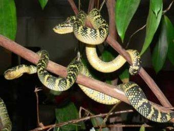 В Нью-Йорке задержали мужчину, в доме у которого жили 850 змей