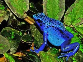 В джунглях Латинской Америки ученые обнаружили 60 новых видов животных