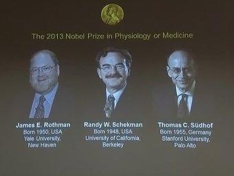 """Нобелевскую премию по медицине вручили за систему """"выброса отходов"""" из клеток"""