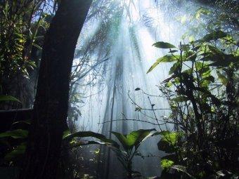 В джунглях Южной Америки обнаружен неопознанный скачущий объект