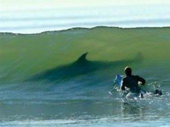 В Австралии серфера съела акула