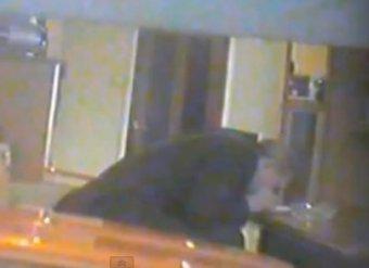 """Ямальский чиновник нюхал кокаин прямо на работе, чтобы принять """"гениальные решения"""""""