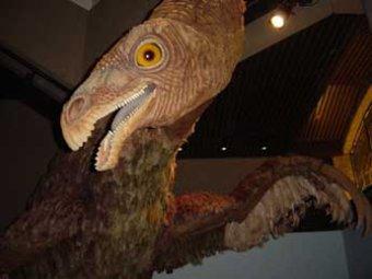 На Кузбассе нашли останки самого нестандартного динозавра
