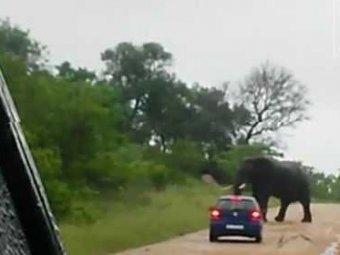 Разъяренный слон перевернул машину с туристами