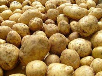 Россия запретила ввоз в страну картофеля из Украины