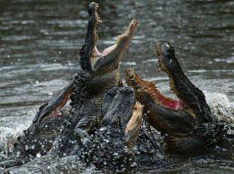 В США обнаружен двухголовый крокодил