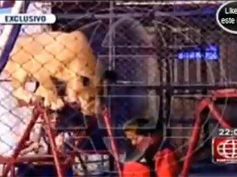В цирке лев напал на женщину в разгар представления