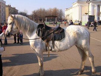 Голая женщина на лошади в центре Москвы шокировала прохожих (фото, видео)