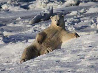 Россия просит ООН расширить границы владений за счет Арктики