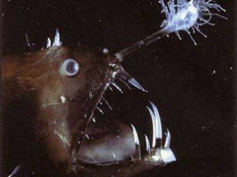 В Сети появилось уникальное видео с морским чертом
