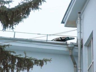 ВИДЕО с огромной змеёй на крыше шокировало жителей Самары (видео)