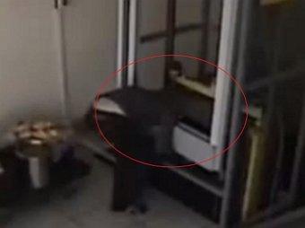 В Саратовском кафе лифт придавил голову официантке