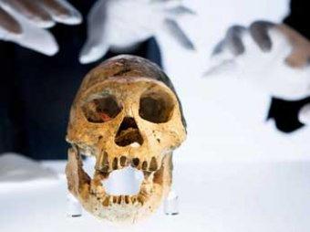 В Воронежской области нашли останки человека, жившего 40 тысяч лет назад