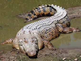 Житель Уганды убил шестиметрового крокодила, который съел его беременную жену