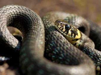 Ученые нашли останки древнейших змей, питавшихся динозаврами
