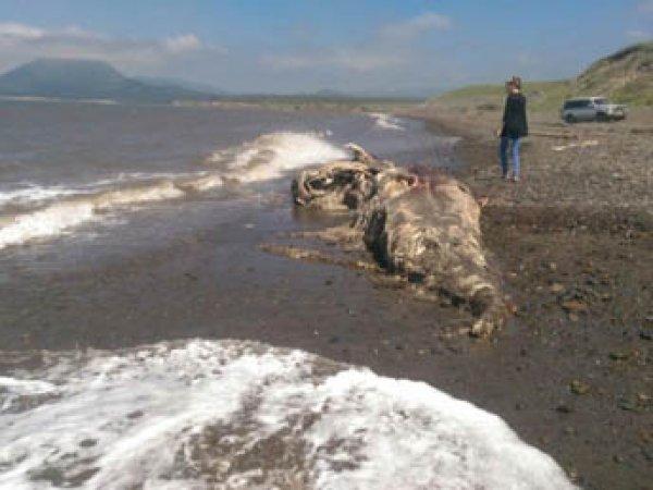 На Сахалине море выбросило на берег останки неизвестного науке чудовища