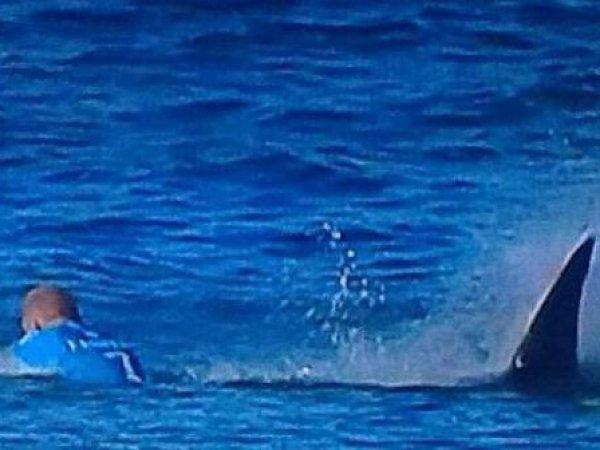 Серфер отбился от акулы в прямом эфире соревнований