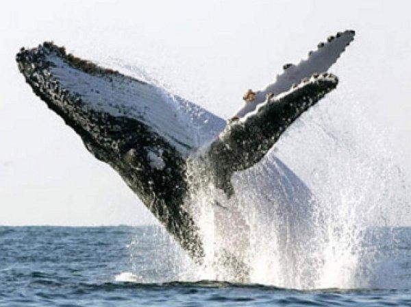 На канадском побережье кит едва не потопил туристов, выпрыгнув из воды