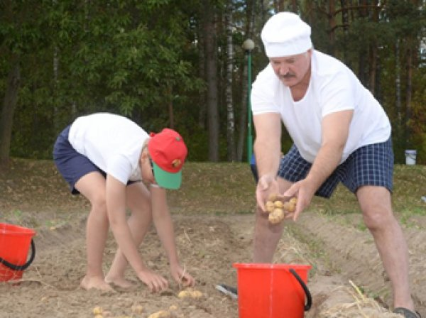 Лукашенко в свой выходной вдвоем с сыном накопал 70 мешков картошки